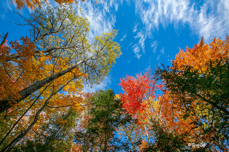 Wispy Clouds and Fall Color - 2019
