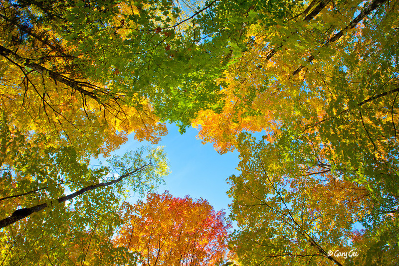 A look up in Craig Lake State Park, MI