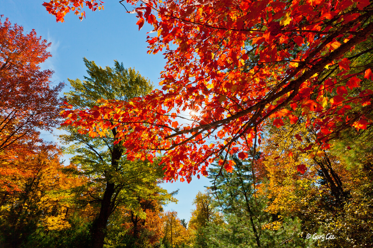 Colorful maple and the sun!