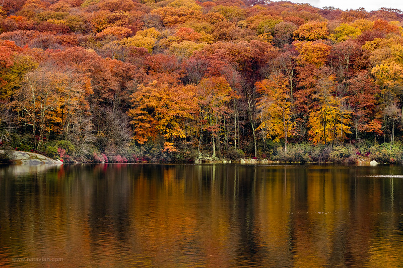 Autumn Reflex