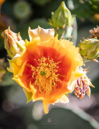 cactus bloom-3246
