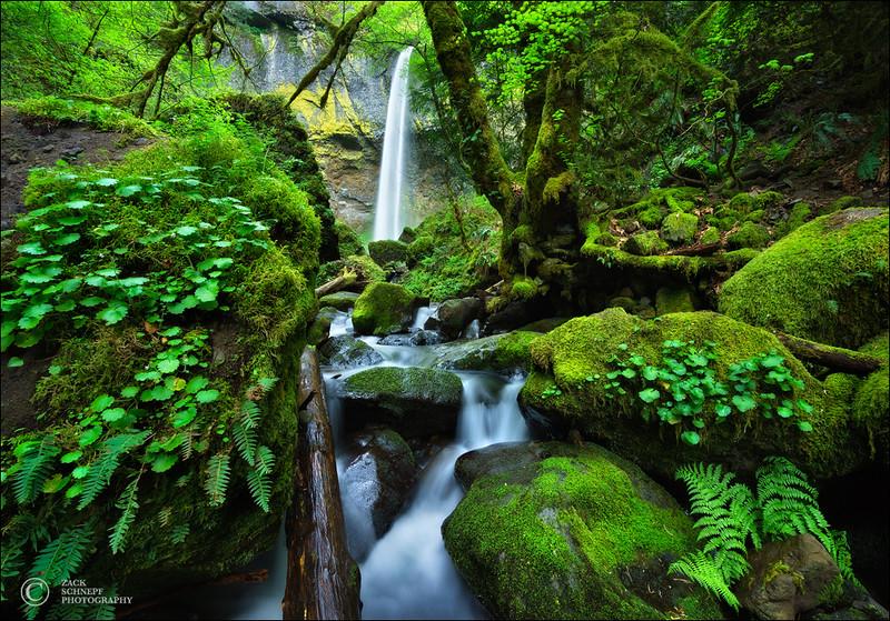 Emerald Forest Falls