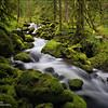 """<font color=""""#FFFFFF"""" size=""""4"""" face=""""Verdana, Arial, Helvetica, sans-serif"""">Oregon Rainforest</font><br> Columbia River Gorge, Oregon"""