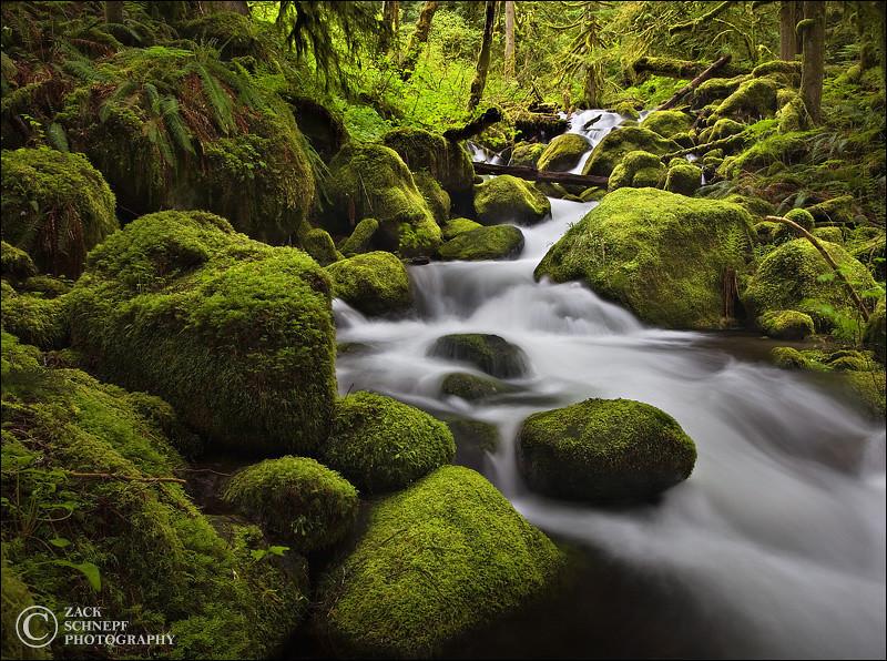 """<font color=""""#FFFFFF"""" size=""""4"""" face=""""Verdana, Arial, Helvetica, sans-serif"""">Rainforest Falls</font><br> Columbia River Gorge, Oregon"""