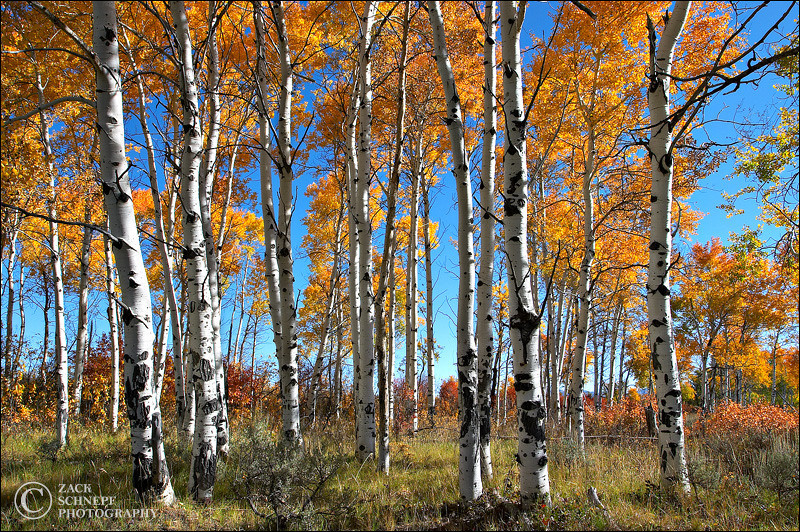 "<font color=""#FFFFFF"" size=""4"" face=""Verdana, Arial, Helvetica, sans-serif"">Aspen Grove</font><br> Grand Teton NP, Wyoming"