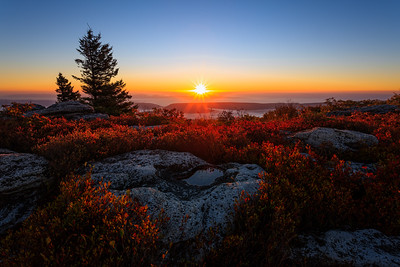 Cloudless Morning in Dolly Sods