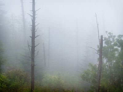 Fog in Smokies, Smoky Mountains, NC