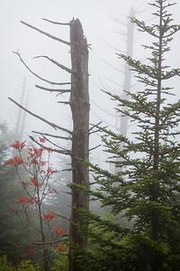 Fog in Smokies, Smoky Mountains, NC