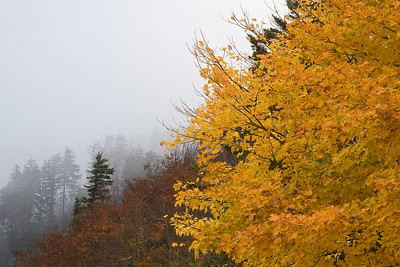 Fog and Fall Colors - Newfound Gap, Great Smokies National Park, NC