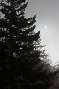 Silhouetted Tree and Sun - Newfound Gap, Smokies National Park, NC