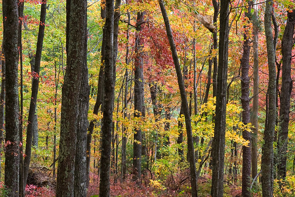 Fall Colors & Forest - Laurel Falls, Great Smokies National Park, TN