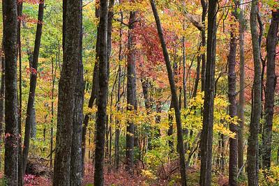 Fall Colors & Forest - Laurel Falls, Great Smokies National Park, TN
