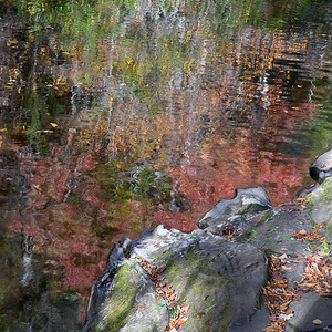 Fall Color Reflection - Great Smokies National Park, NC