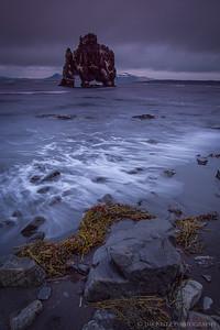 Hvritserkur sea stack, north Iceland