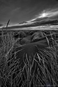Black sand dunes and grasses near Höfn, in eastern Iceland