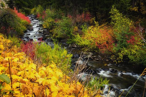 Fall along Napias Creek