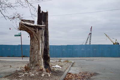 Dead tree in front of construction site