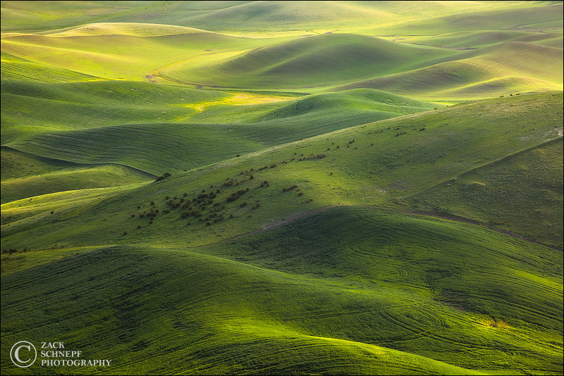 "<font color=""#FFFFFF"" size=""4"" face=""Verdana, Arial, Helvetica, sans-serif"">Green Palouse Hills</font><br> Palouse, Washington"