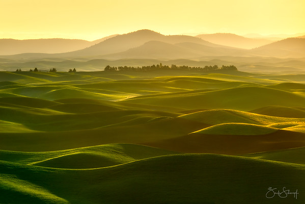Golden Palouse Waves Palouse, Washington