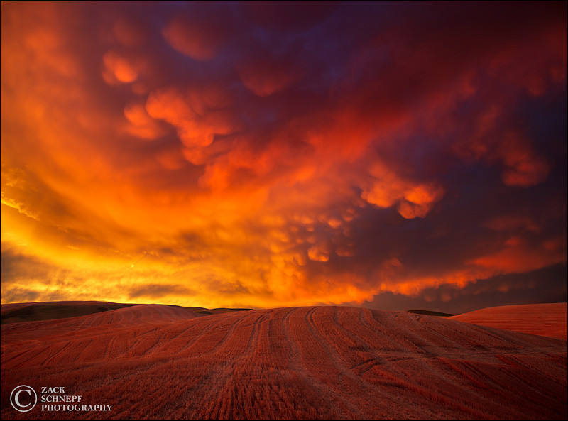 Storm Light Over the Palouse