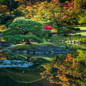 Autumn reflections at the Seattle Japanese Garden.