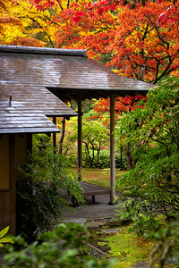 Peak autumn colors this morning at the Seattle Japanese Garden - perfect time for a visit.
