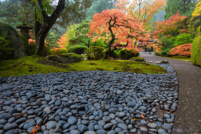 Rocks and Maple, Portland Japanese Garden