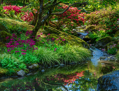 A tranquil corner of the Seattle Japanese Garden.