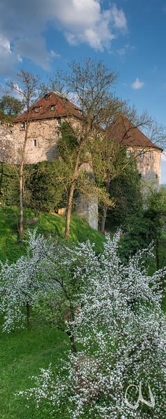 Obstblüte im Schloßgraben, Tübingen