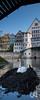 Brütende Höckerschwäne vor der Neckarfront, Tübingen