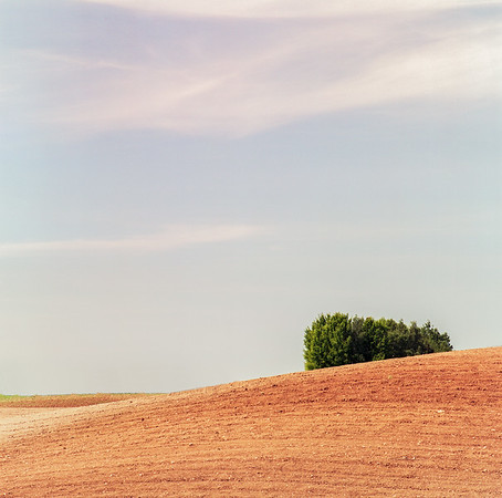 Fields, Antazavė [2017]