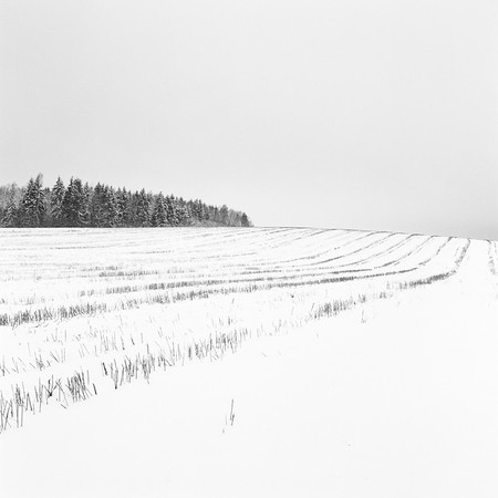 Patterns, somewhere near Vilnius [2017]