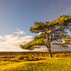 The New Forest is an area of southern England which includes one of the largest remaining tracts of unenclosed pasture land, heathland and forest in the heavily populated south east of England.