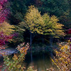 Fall Foliage Zoom