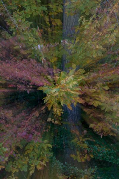 Foliage Leaves Zoom