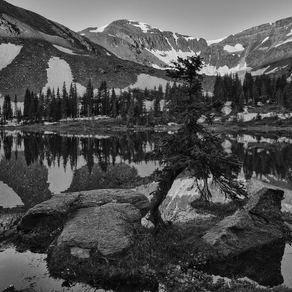 Pine, Lamphier Lake