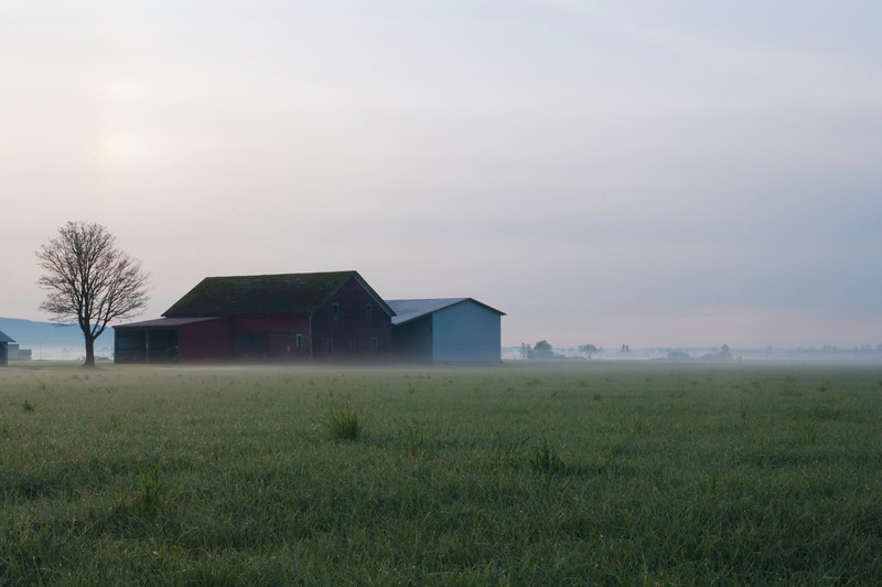 Red Barn in Field<br /> La Conner, WA