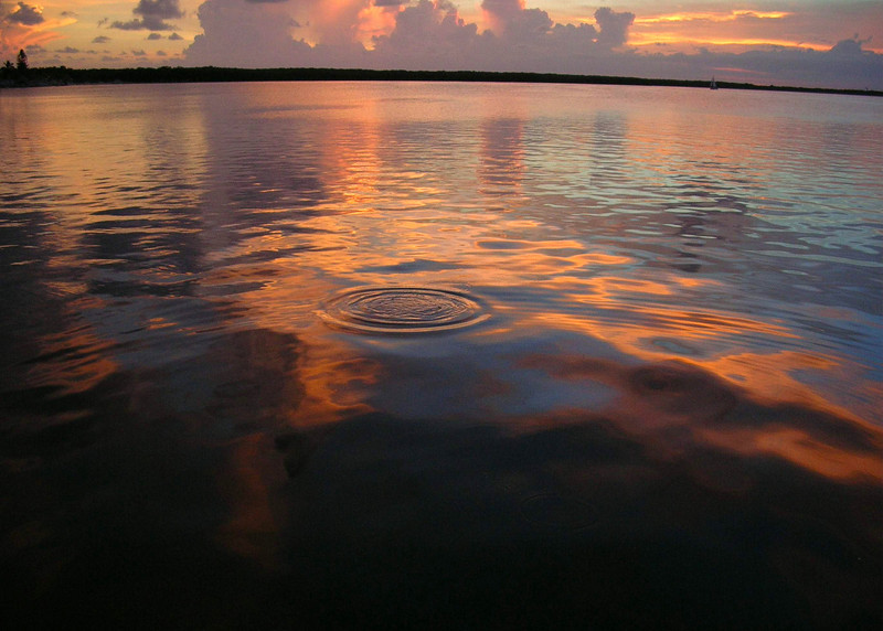 Sunset Seal