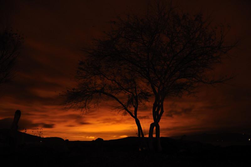Tree Silhouette<br /> Guemes Island, WA