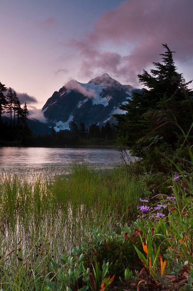 Mt. Shuksan Wildflowers<br /> Mt. Baker-Snoqualmie National Forest