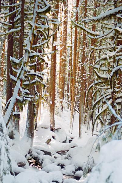 Laced in White<br /> Nooksack Falls, WA