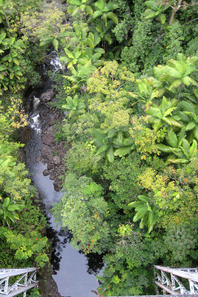 Stream through Hilo Forest