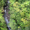 Stream through Hilo Forest