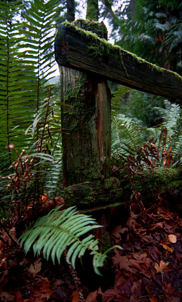 Moss Covered Rail<br /> Bellingham, WA