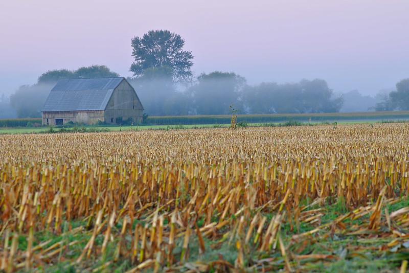 Morning Fog<br /> Whatcom County, WA