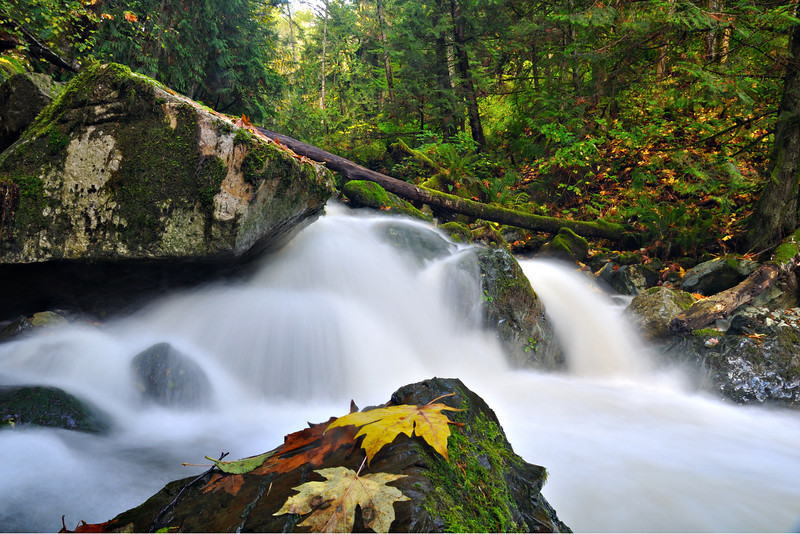 Rushing Water at Oyster Creek<br /> Bellingham, WA