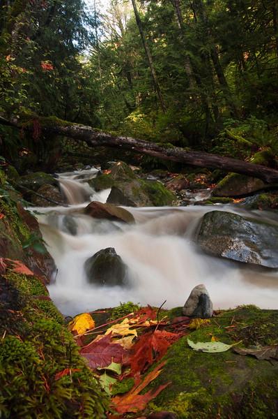 Oyster Creek<br /> Whatcom County, WA
