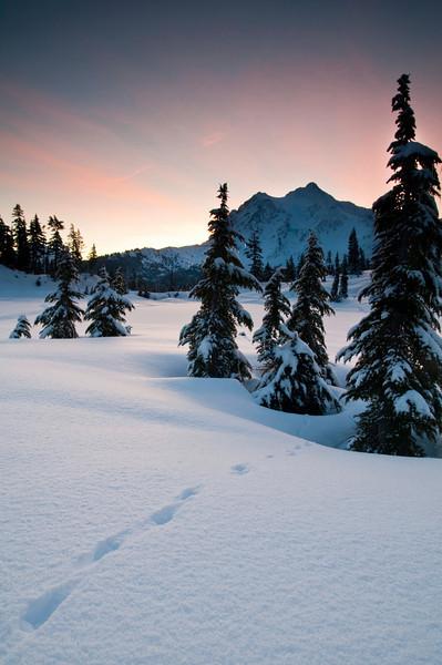 Tracks in the Snow<br /> Mt. Shuksan, WA
