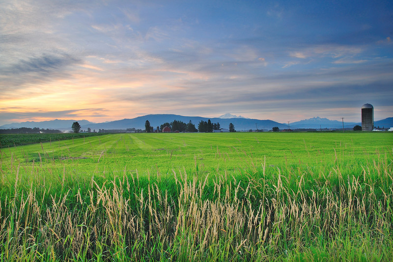 Quiet Field<br /> Whatcom County, WA