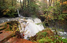 Autumn Morning<br /> Whatcom Falls Park, Bellingham, WA
